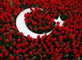 Turkish flag and tulips